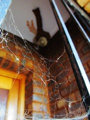 The Swallows Nest (Cathlon) Tags: cobweb porch swallownest lowpov monthlytheme theflickrlounge