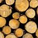 Wood / Holz III
