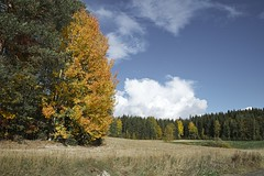 Autumn tree (jptoivon) Tags: autumn sky color tree nature pine clouds forest suomi finland landscape leaf nikon europa europe sunny hämeenkyrö maisema syksy lehti d800 mänty 2013 väri