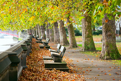 Benches on Thames Embankment (Dmitri Naumov) Tags: park uk autumn england brown tree london fall nature public westminster stone thames river bench season outdoors october day branch quiet empty seat peaceful nobody calm trunk embankment millbank recreational victoriatowergardens