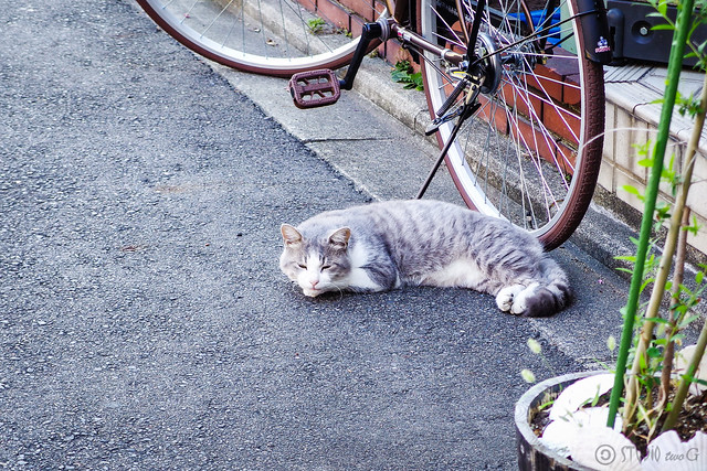 Today's Cat@2013-10-14