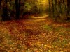 A Last Run ... (2bmolar) Tags: fall woods odc day290 schuylkillcounty lastrun day290365 3652013 365the2013edition 17oct13