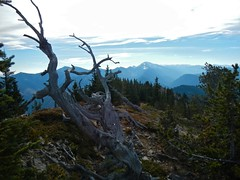 Gunnery Mt Summit Hike -Gnarley tree on summit ridge (benlarhome) Tags: autumn mountain canada trekking trek kananaskis rockies hiking hike alberta rockymountain gunnerymt