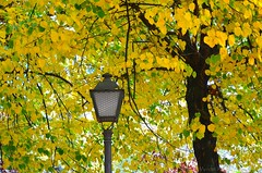 Autumn and Street Lamp in Madrid (Mrm Blue) Tags: madrid autumn brown tree green leaves yellow hojas farola streetlamp branches rbol otoo ramas