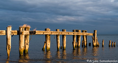 Fify Point Conservation Area - Abandoned Dock-6 (digithief) Tags: sun ontario canada docks sunrise nikon logs lakeontario rise d800 oldpier fiftypointconservationarea