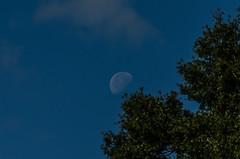 Day Moon-018 (VinceFL) Tags: manfrottotripod tamron70300mmf456dild12autofocusmacro vinceflnikond7000orlando daymoon11232013
