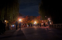 night Kyoto (jam343) Tags: autumn leaves japan night leaf kyoto foliage momiji 京都 祇園 gion gr shirakawa grd 白川 gr3 grd3