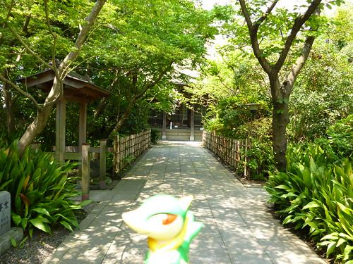 Servine in Kisarazu, Chiba 14 (Shojoji Temple)