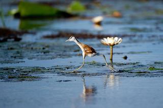 Botswana Okavango Delta Photo Safari 57