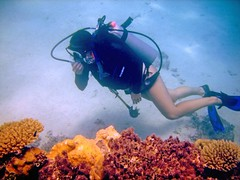 Jaw Fatigue (DivePhoto) Tags: coral michelle diver fatigue sxcuba