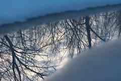 Hibernation Season (NaturalLight) Tags: winter snow tree reflections kansas wichita chisholmcreekpark ksccna8794