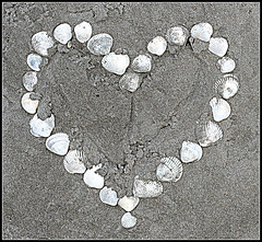 Heart of mine ! (Sidsel Oba) Tags: love beach strand hearts sand heart shell valentine lovely valentin hjerte skjell hvite