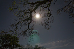 Chinaberry Moon (Nohrmal) Tags: sky moon tree night stars leo space cancer astrophotography regulus astronomy hydra lynx procyon chinaberrytree monoceros canisminor