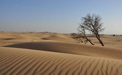 Al Wathba  Desert - Emirati Arabi Uniti (collage42 -Pia-Vittoria//On/OFF on the beach) Tags: eau dunes dune deserto emiratiarabiuniti alwathba mygearandme mygearandmepremium mygearandmebronze mygearandmesilver mygearandmegold mygearandmeplatinum mygearandmediamond ruby15 ruby20 rubyfrontpage