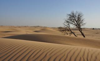 Al Wathba  Desert - Emirati Arabi Uniti