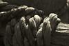 ruined Rope (- Gothic -) Tags: blackandwhite bw macro cord tie rope linked filo corda fune legata legare invernizzi andreainvernizzi canoniani fotografinewitaliangeneration canon550d
