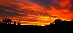 California Sunset (Spebak) Tags: california trees sunset summer mountains clouds evening nationalpark joshuatree silhouettes july southerncalifornia californiadesert joshuatreenationalpark 2015 spebak