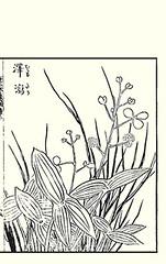 Chinese arrowhead (Japanese Flower and Bird Art) Tags: flower chinese arrowhead sagittaria trifolia alismataceae ippo hanabusa woodblock picture book japan japanese art readercollection