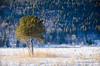 tree (raphlosam) Tags: jura neige paysage snow hiver tree arbre forêt lac les rousses pentax k5 landscape