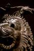 DSCF0619.jpg (Darren and Brad) Tags: chimeradiarezzo bronze italia chimaeraofarezzo nationalarchaeologicalmuseum firenze palazzodellacrocetta museoarcheologiconazionale italy bronzo florence