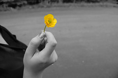 flower/hand (_ashleighmarie) Tags: morning flower love photography is spring hand buttercup hate shit blah hehe hahaha yayy