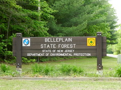 (Christine_Ray) Tags: new pine forest state reserve national jersey pinelands barrens belleplain belleplaincapemayandparvin capemayandparvin
