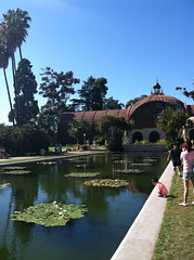 Botanical Building & Lily Pond (ellemorgan) Tags: california reflection pond sandiego waterlilies palmtree balboapark nymphaeaceae