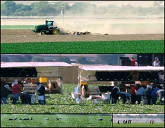 California agriculture (smacss) Tags: california people plants tractor collage workers gonzales farm harvest fields agriculture plowing hoeing
