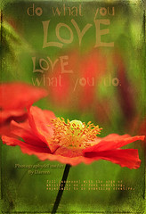What you Love (The Photo-Guy Photography By Darren) Tags: red summer inspiration plant painterly flower green art texture love nature floral beautiful beauty closeup botanical design spring flora colorful pretty remember natural symbol blossom antique vibrant decorative digitalart decoration nobody retro petal foliage stamen poppy poppies fragrant bloom romantic wildflowers organic remembrance process relaxation botany decor wildflower fragile redflower papaver elegance vibrantcolor encouragement redpoppy poppyfield poppyflower fragility vintagewildflower