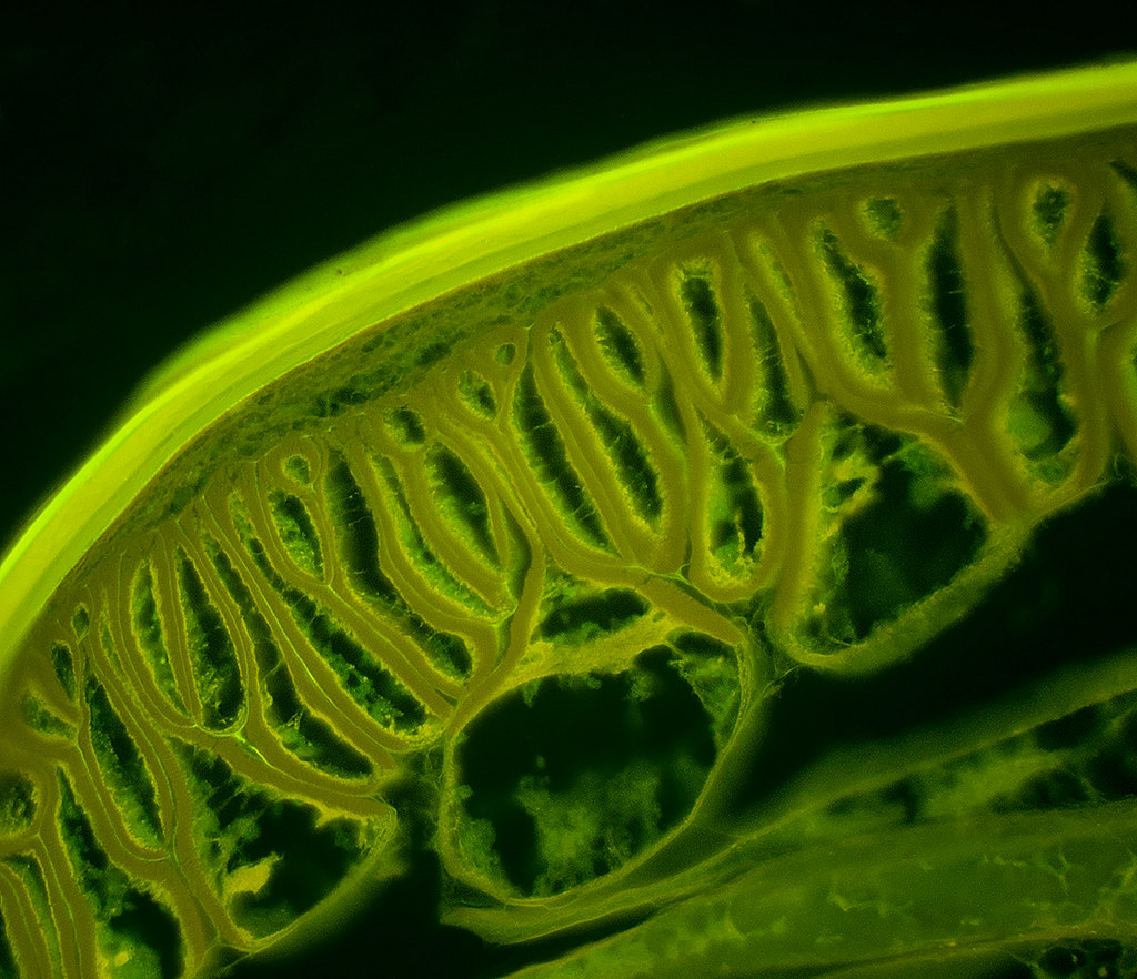 The World's Best Photos Of Nematode And Worm