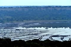 Salines of Lake Bunyampaka - Uganda 2012 (follettomonello ) Tags: africa parco lake water lago see salt safari crater uganda saline afrique cratere salines savana queenelisabethnationalpark lakebunyampaka bunyampaka