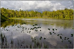 Laughing Loon Lake (jpmckenna - Tenquille Lake Up Next) Tags: hiking vancouverisland bog capescott northcoasttrail