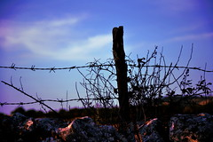 (Im-AN) Tags: sunset wild silhouette nikon shadows barbedwire shrub nikond3100