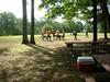 GreyhoundPlanetDay2008018
