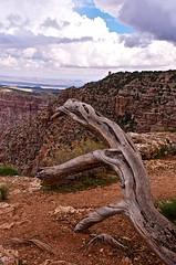 The Grand Canyon (bdinphoenix) Tags: arizona nature landscape nationalpark nikon grandcanyon unesco geology d7000