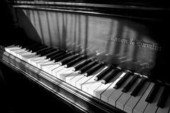 Piano (tim.perdue) Tags: piano keyboard musical instrument black white ebony ivory keys shadow light monochrome bw bungalow jazz columbus ohio music concert mason hamlin instrumental