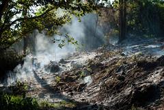 (Thiéle Elissa) Tags: nature nikon natureza árvores fumaça incêndio queimada devastação meioambiente desmatamento d3000 nikond3000 thiéleelissa