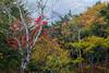 Autumn leaves (kabtan) Tags: autumn japan canon eos nikko 紅葉 tochigi 6d