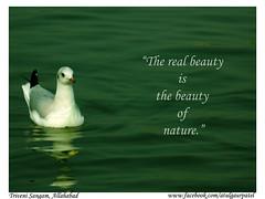 "Triveni Sangam Allahabad (India ""Through thick & thin"") Tags: india bird nature water beautiful beauty up river real photography is asia atul siberian migration patel ganga sangam allahabad gaur jhansi bundelkhand yamuna triveni"
