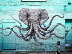 Elephantacles