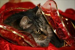 Christmas Lucy