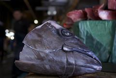 Tuna head (vigorare) Tags: morning fish japan 35mm photography japanese prime tokyo photo dof pentax market photos bokeh picture tsukiji tuna smc f35 smcpentaxda smcpdal35mmf24al