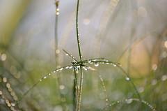 Waterdrops (madbesl) Tags: nikon bokeh 1001nights waterdrops wassertropfen platinumheartaward d5100 1001nightsmagiccity nikkor55300