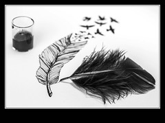 Reality check (ANVRecife) Tags: bw black macro ink canon dream feather 7d reality concept blackink vallejos creativephoto creativeconcept conceptphotos anvrecife featherdrawing featherink