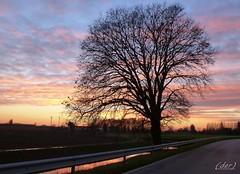 solitario (erman_53fotoclik) Tags: silhouette strada tramonto foto cielo albero solitario dmc canale rami pianta destro scatto ermanno profilo panasonik tz25 erman53fotoclik vision:sunset=0673 vision:outdoor=0922 vision:sky=0751 guardareil