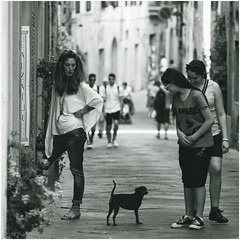 Staring at Dogs (Fr@nk//) Tags: street bw italy dog dogs topf25 canon square topf50 europe format topf100 streetshot bestoftheday