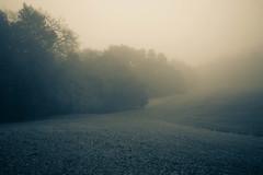 Foggy Dew (anne_stahl) Tags: california morning winter fog landscape vineyard spring