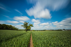 Lonely Tree (Olly Plumstead) Tags: blue sky cloud tree green field clouds canon landscape big long exposure mark hill lee crop lone 5d crops lonely olly 1740 stopper plumstead 5dmarkii 5d2