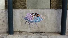 Pol Cosmo / Holstraat - 8 aug 2015 (Ferdinand 'Ferre' Feys) Tags: streetart pasteup insect graffiti belgium belgique belgië urbanart graff ghent gent gand graffitiart arteurbano artdelarue urbanarte polcosmo