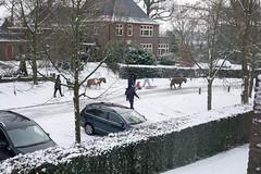 20170212-DSC06296 (mekare_nl) Tags: blaricum thenetherlands sneeuwpret